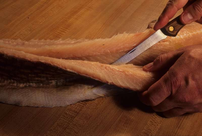 Northern Pike Filet for Fish Tacos